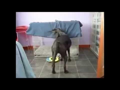 Grappige honden filmpjes. Grappige video's, filmpjes - YouTube
