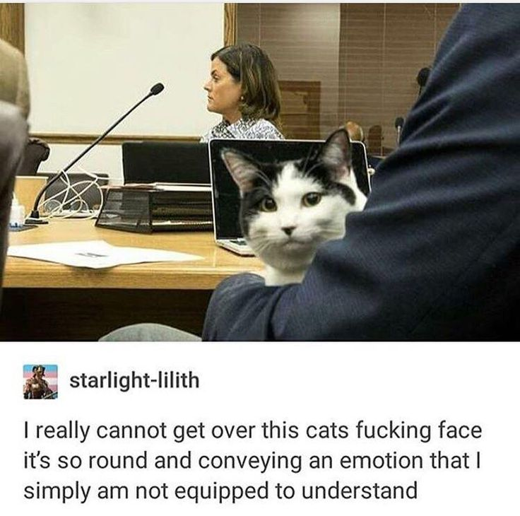 I want to attend a meeting where there are cats!