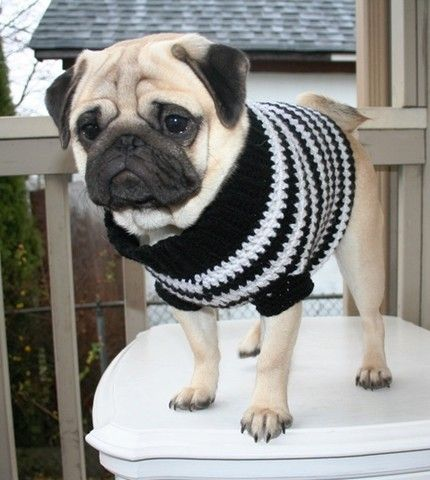 1263 best images about paws on Pinterest | Pug meme, Pug love and Brindle pug