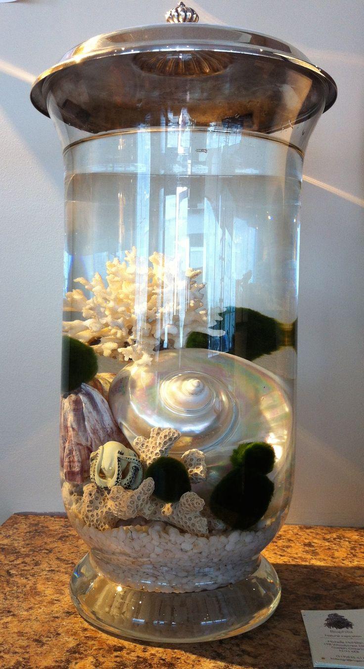 Marimo and sea life