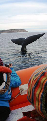 Avistaje de Ballenas en Puerto Pirámides - Península Valdés #ocean #whalewatching #ocean #marine #patagonia #argentina
