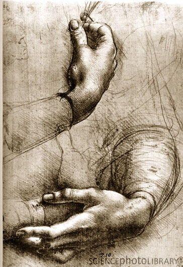 Study of Hands. Leonardo da Vinci c.1474