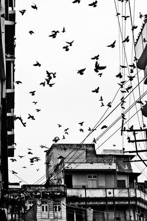 Reisfotografie straatfotografie vogels zwart-wit Udaipur India. Foto door Marijke Krekels fotografie