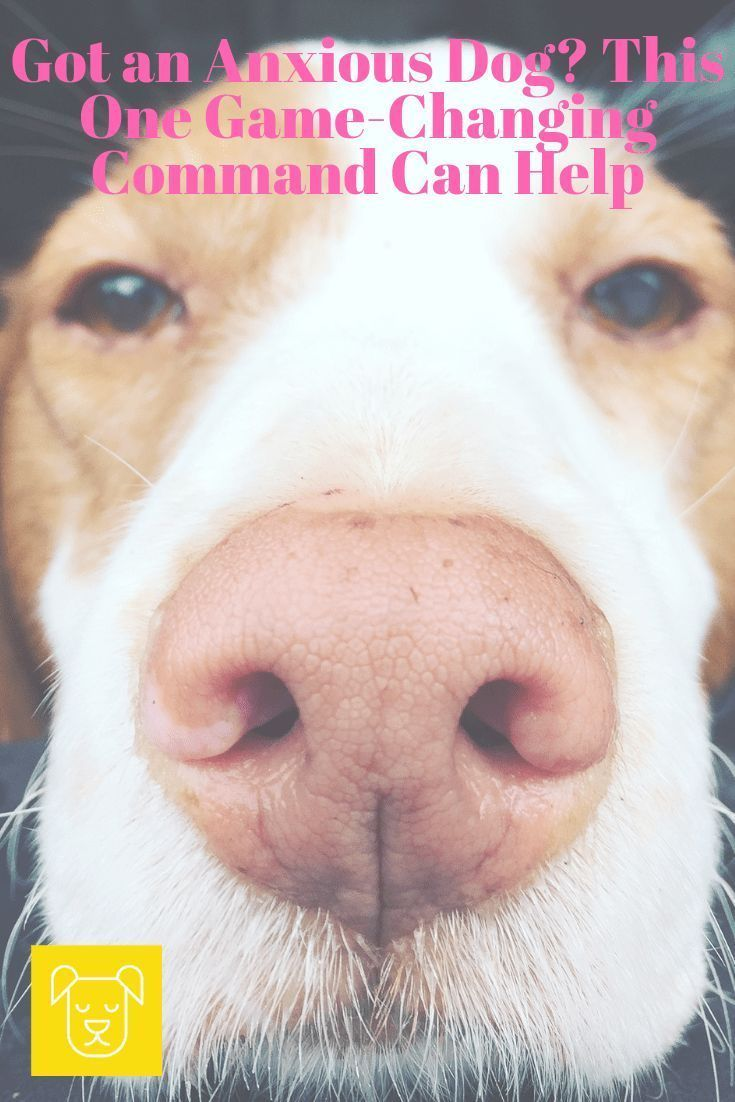1 Awesome Training Command To Teach Your Dog That You Ll Love