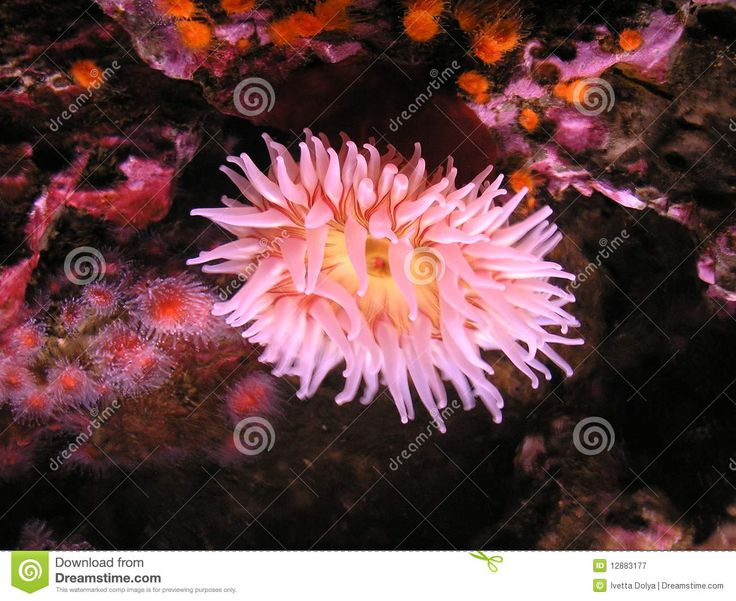 flora del mundo -La belleza de los mares tropicales, los colores brillantes del suelo marino, los pétalos rosados de la flora subacuática, una vida única del mundo ...