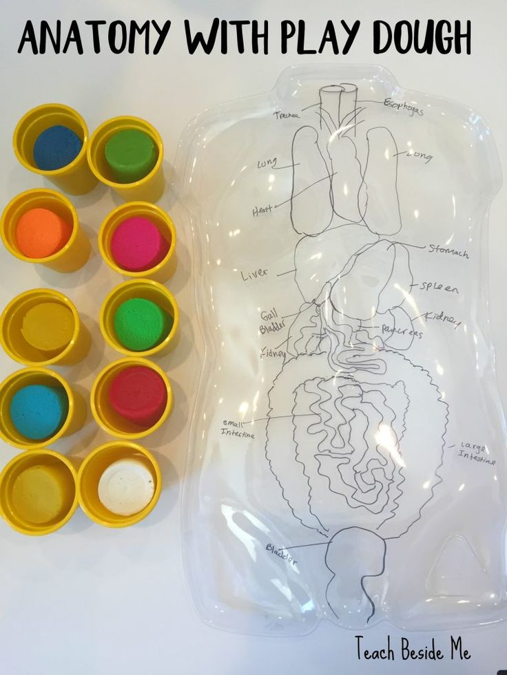Anatomy with play dough                                                                                                                                                      More