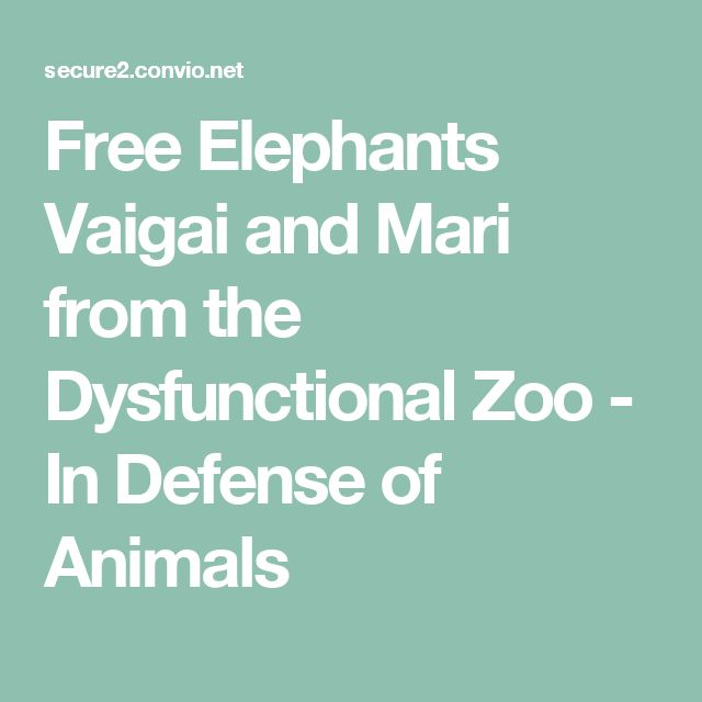Free Elephants Vaigai and Mari from the Dysfunctional Zoo - In Defense of Animals