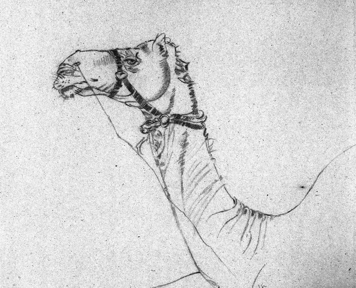 Pencil Sketch of Camel- on location of Jaipur, Rajasthan, India