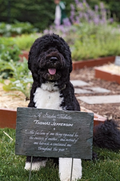 Bo Obama is very busy supervising the White House garden...