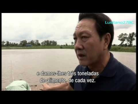 Peixe, Criação em Águas Turbulentas | Portal da Saúde