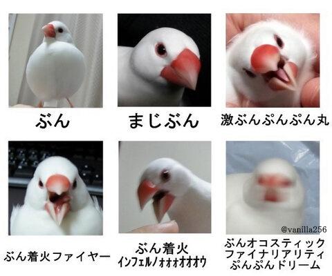 Twitter / vanilla256: 分かりにくい怒りの単位を文鳥で表現 #buncho
