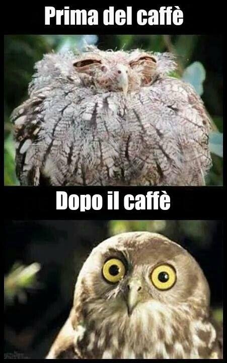Prima del caffè... Dopo il caffè #caffe
