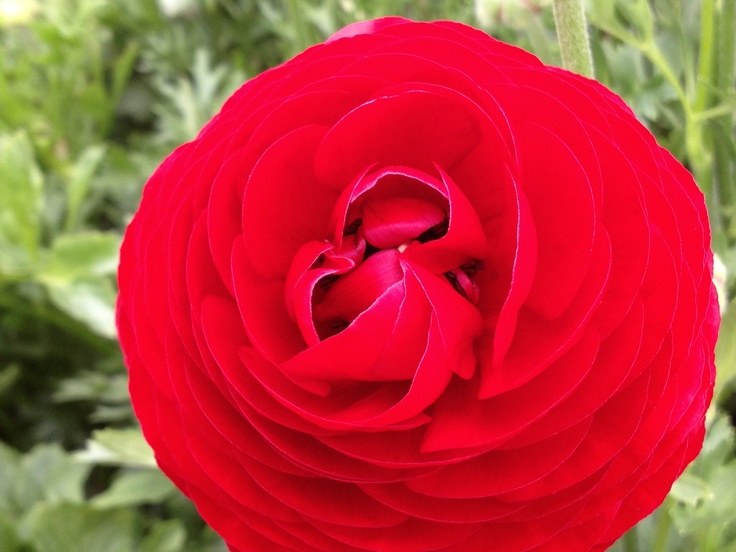 Flower Fields beautyful close-up