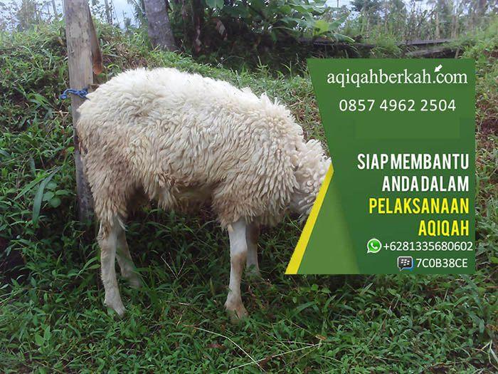 Jasa Aqiqah Surabaya Jasa Layanan Aqiqah Murah: SMS: 085749622504 Whatsapp: +6281335680602 PinBB: 7C0B38CE Website: www.aqiqahberkah.com jasa aqiqah surabaya, jasa aqiqah di depok, jasa aqiqah bogor, jasa aqiqah jakarta barat, jasa aqiqah di bekasi, jasa aqiqah bsd, jasa aqiqah sidoarjo, jasa aqiqah semarang, jasa aqiqah solo, jasa aqiqah purwokerto, jasa aqiqah di pamulang, jasa aqiqah di jogja, jasa aqiqah di jakarta, jasa aqiqah anak, alamat jasa aqiqah