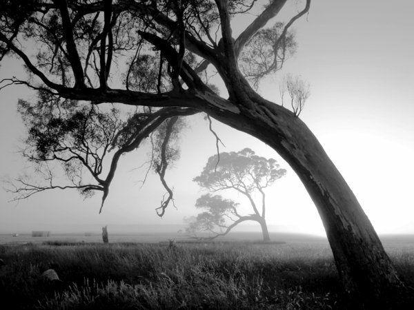 La beauté de la brouillard