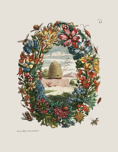 We close pollinator week with this animated tribute to the bees, bugs, birds, bats, and others who make life a little sweeter. Original from Maria Sibylla Merian's Raupen wunderbare Verwandelung und sonderbare Blumennahrung , 1730