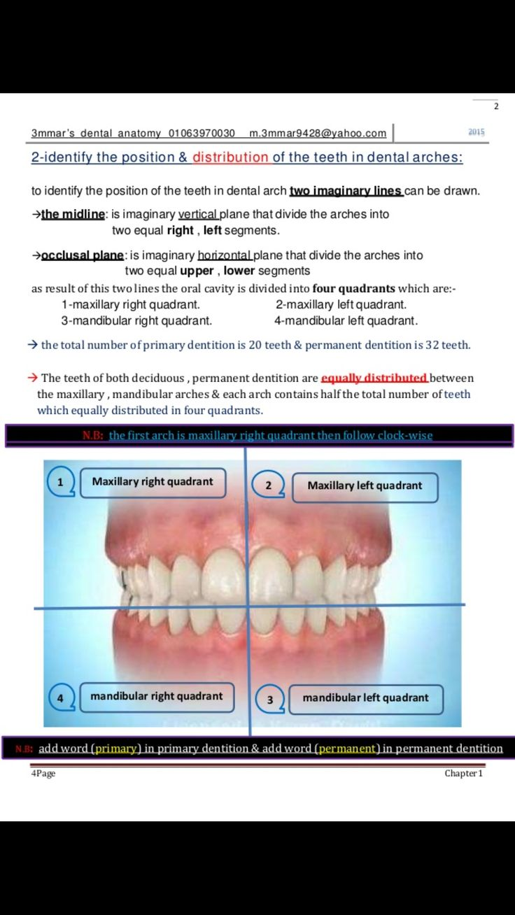 The 17 best Dental images on Pinterest | Dentistry, Dental and Tooth