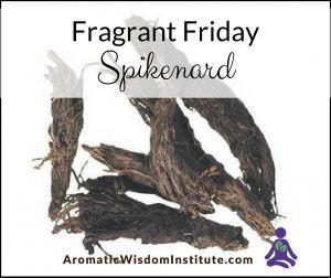 Fragrant Friday: Spikenard (Nardostachys jatamansi)