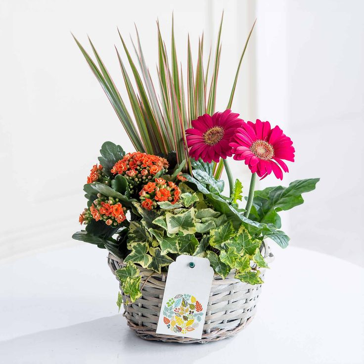 Autumn Mix Gift Basket: This charming collection of seasonal plants make the perfect long-lasting gift for any occasion. Beautifully presented in a woven willow basket with a delightful gift tag, we're sure they'll be impressed!