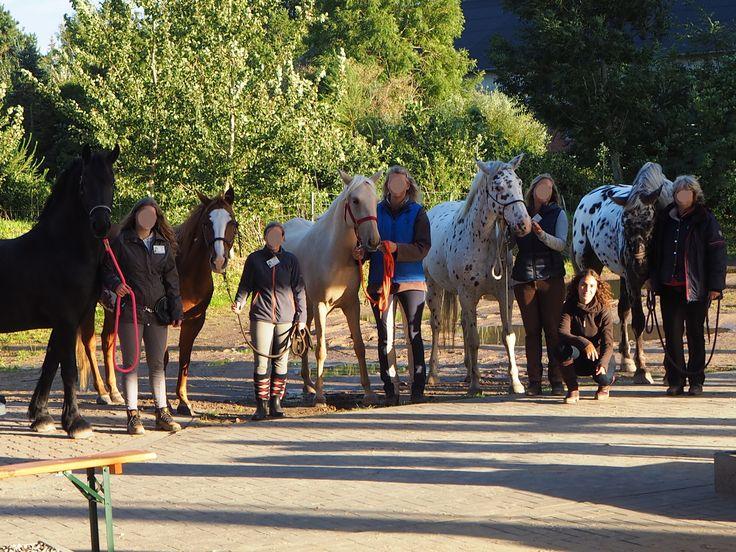 Ein Nachmittag auf dem Kenzie Dysli Seminar : Motiviere Dein Pferd – Der Weg zur Freiheitsdressur