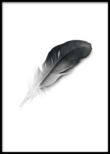 Print, poster with a lovely black feather. Black and white posters and art prints. Buy online. www.desenio.co.uk