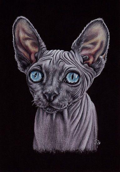 "SPHYNX 8 cat kitty kitten chat painting Sandrine Curtiss ORIGINAL Art 5x7"" #Realism"