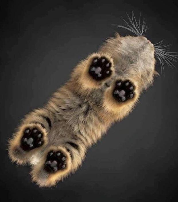 Katzenpfoten - Von unten gesehen, noch niedlicher.
