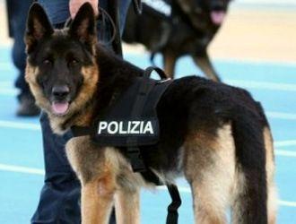 Cani poliziotto tedeschi muniti di stivaletti