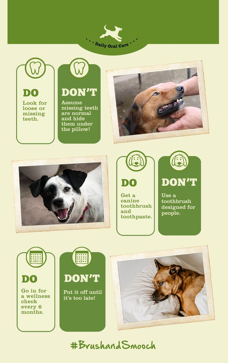 How to brush your dogs teeth redbarn pet products in