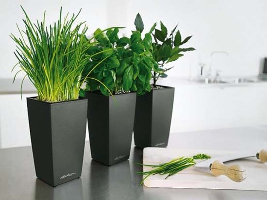 black modern pots indoor kitchen planters placed in indoor plant pots to add natural beauty of