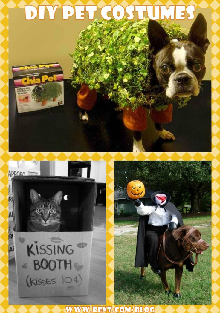 The chia pet and kissing booth are brilliant ( because cats love boxes!)