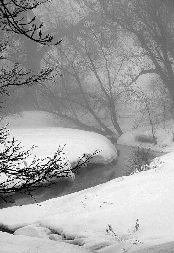 A misty morning by the brook