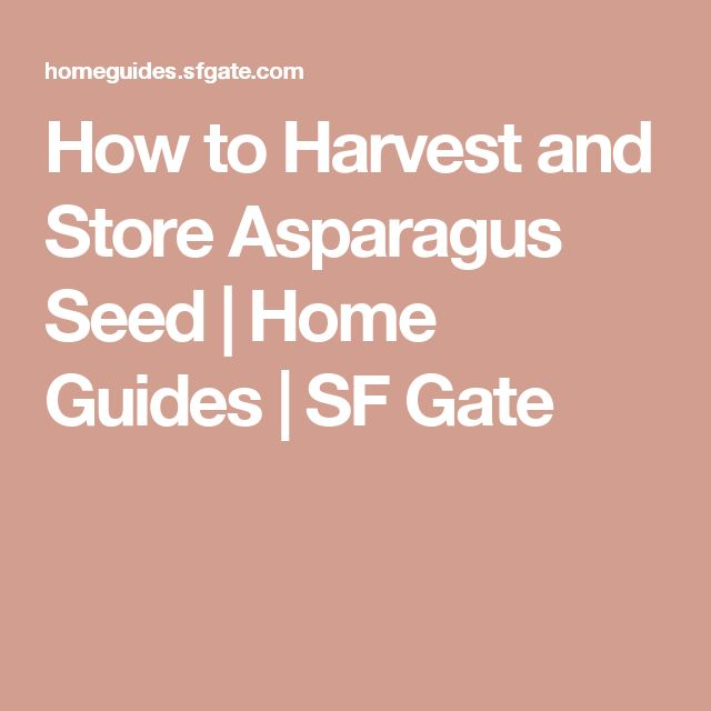 How to Harvest and Store Asparagus Seed | Home Guides | SF Gate
