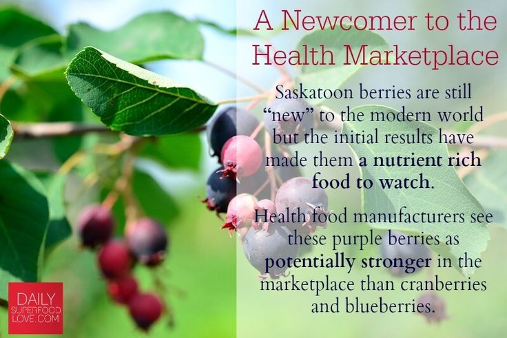 Have you heard about the benefits of saskatoon berries?These berries are blasting into media consciousness worldwide for excellent reasons! Here's why...