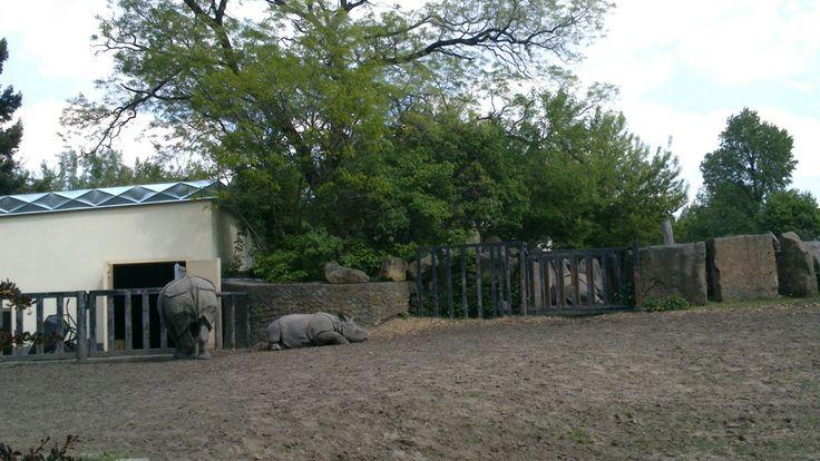 Z nosorożcami za pan brat