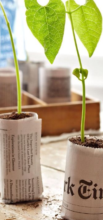 Seed starter papers