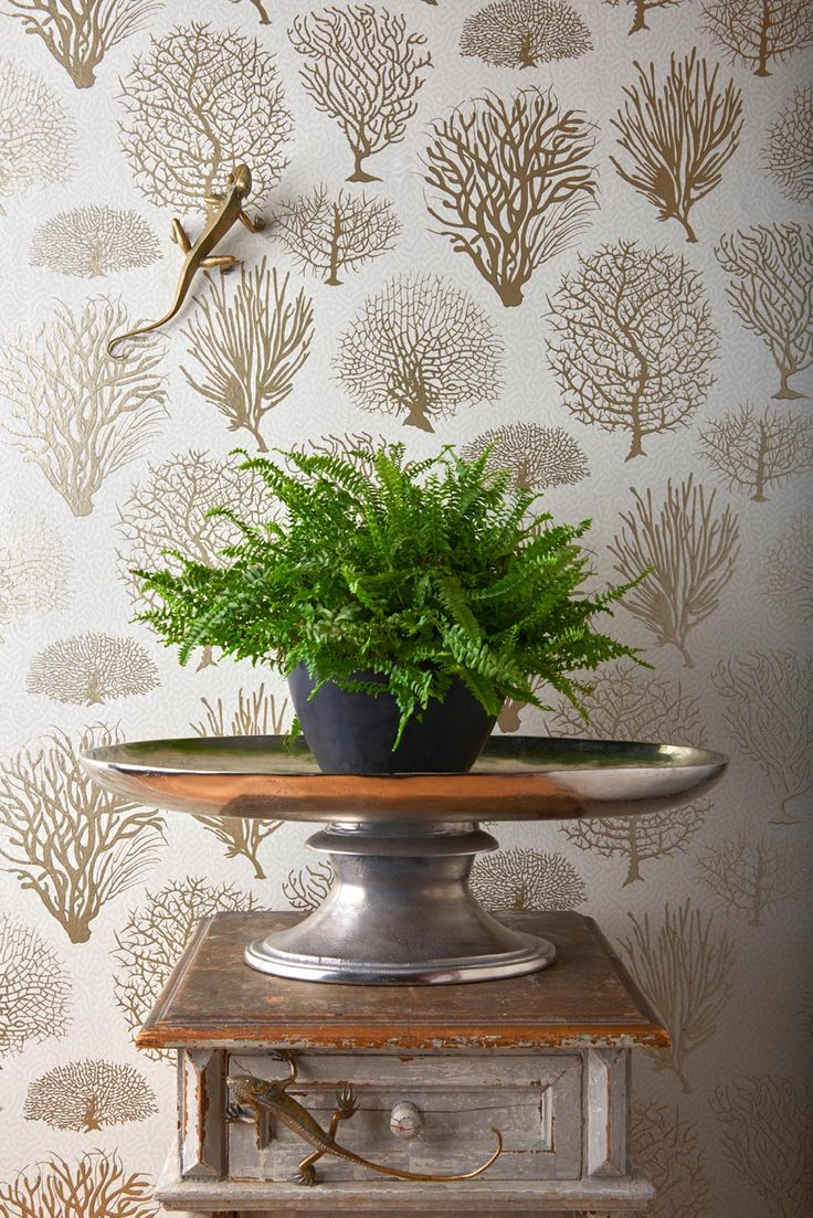 18 best curio images on pinterest | wallpaper designs, lace