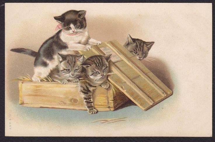 Cat-Kitten-Crate-Box-Maguire?-A & M B-Antique Postcard