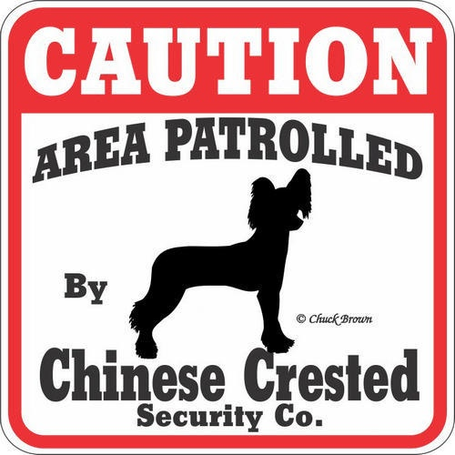 """Our Price $7.95  ID: 201100010882  This """"Caution Area Patrolled by Chinese Crested"""" sign is a great way to let everyone know you have a Chinese Crested patrolling your property. These signs are screen printed on UV protected Styrene. These 11"""" x 11"""" signs are weather resistant and suitable for outdoors. Made in the USA  http://www.calendars.com/dbs/Chinese-Cresteds/Chinese-Crested-Caution-Sign/prod201100010882/?categoryId=cat10127=cat10127"""