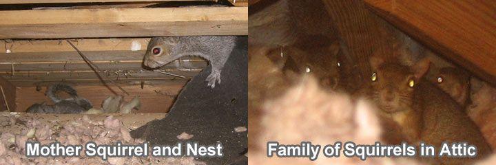 78 Best Mouse Amp Rat Control Images On Pinterest Rat