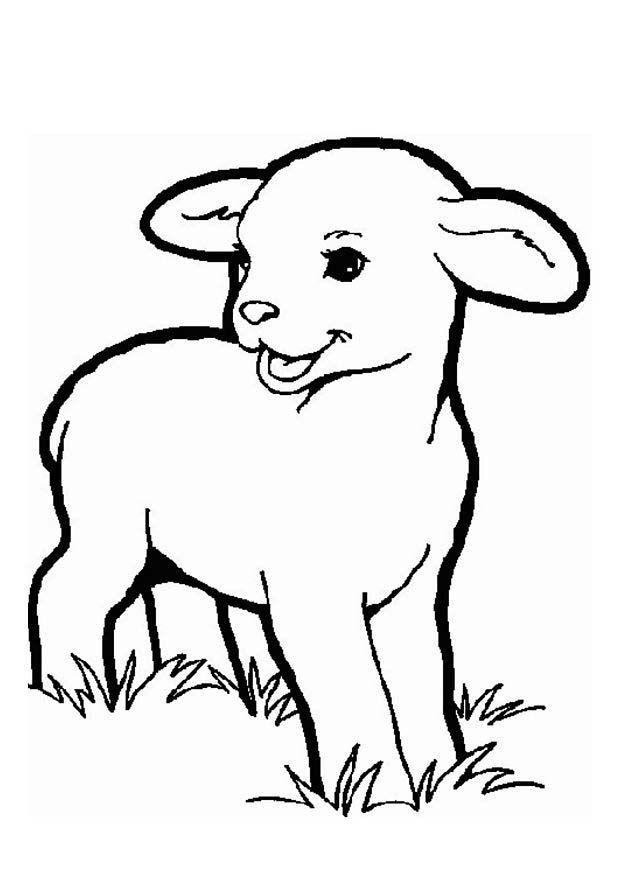 Colorir Desenhos De Cordeiro Ovelha Desenho Paginas Para