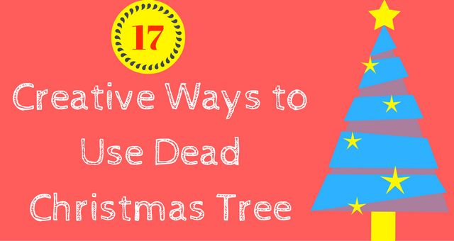 17 interesting ways to use(recycle) your dead Christmas tree. Here are some quick and easy tips(ideas) for using a dead Christmas tree in a better way.