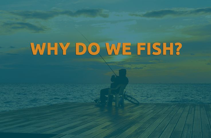 When sitting silently reflecting whilst fishing, have you ever really answered this question, why do we fish? https://about.fishpointer.com