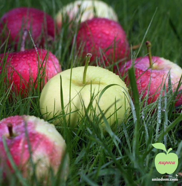 anindom.com | рецепты | Вкусные Яблочные Пироги