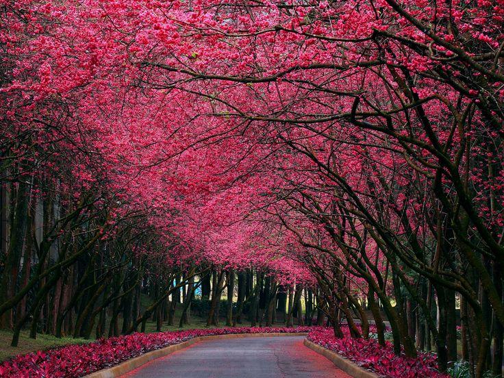 http://all-images.net/fond-ecran-paysage-nature723/