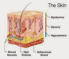 Legnagyobb szervünk: a bőr http://www.szappanmuves.hu/2014/03/legnagyobb-szervunk-bor.html #skin #save #cosmetics #natural