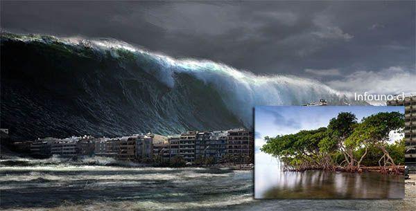 Video: Los Manglares son capaces de protegernos y detener un #tsunami - https://infouno.cl/video-los-manglares-son-capaces-de-protegernos-y-detener-un-tsunami/