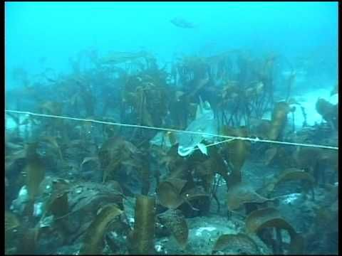 Underwater camera from longline fishing of cod - YouTube
