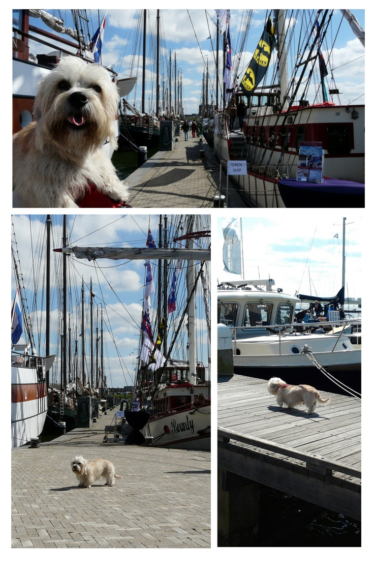 Ziggy at the boatshow