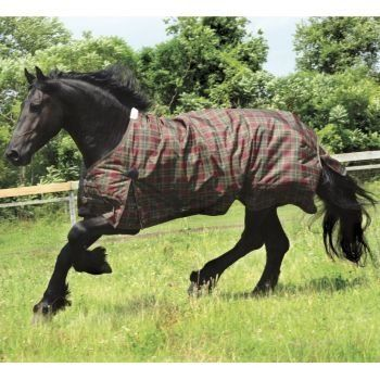 Saxon 600D Turnout Blanket 200g 69 Hollyberry Plai by Saxon. $62.99. Saxon(R) 600 Denier Turnout Blanket-200g Medium Weight For over 20 years Saxon(R) has provided quality sheets and blankets at a value price! Exclusive plaid designs are trimmed with coordinating binding to give your horse the look for less! Available in multiple styles so you can choose more than one color to represent the type or warmth of blanket taking the confusion out of trying to figure out which b...